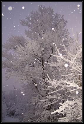 levée du jour sous la neige au flash