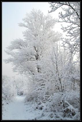 le matin sous la neige