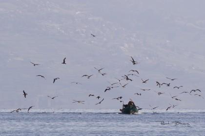 le pêcheur et ses mouettes